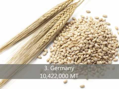 Top 10 Barley Producing Countries