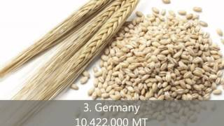 barley production in the united states essay Barley is a major cereal grain, commonly found in bread, beverages, and various cuisines of every culture one of the first cultivated grains in history, it remains one of the most widely consumed.