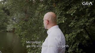 Alternative proteins from microalgae