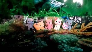 Моя Коллекция на Маджики   Любимые котята