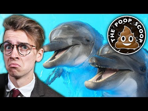 Download Youtube: ARE DOLPHINS STONERS? - The Poop Scoop