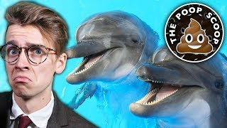 ARE DOLPHINS STONERS? - The Poop Scoop