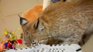 Ханна нашла запахи нового кота