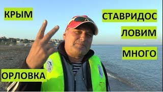 Севастополь. В Орловке много ставриды нынче