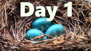 Repeat youtube video My Live Bird Cam w/ Babies Day 1