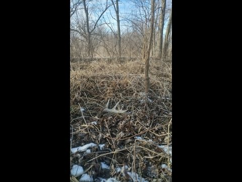 Iowa shed hunting 2017 9 and 10 youtube for Iowa fishing license 2017