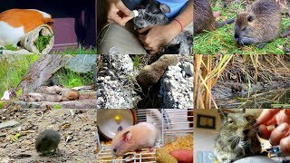 Rodents For Kids With Videos Fun & Eductaional Learning