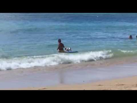 Surfing Dog Hawaii