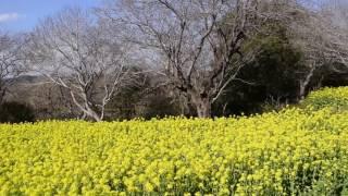 阿部倉登山口から大楠山へ3(横須賀市)