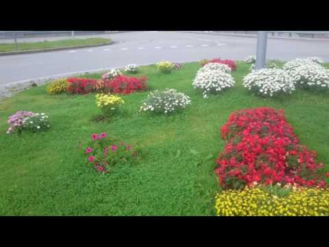 Osterøy. Blomstrende rundkjøring ved Lonevåg.