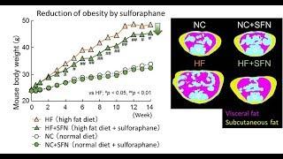 Сульфорафан и увеличение продолжительности жизни человека