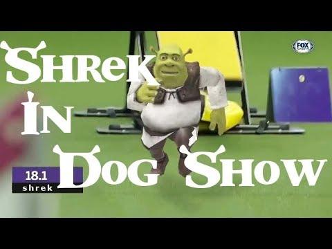 Shrek In Dog Show Youtube