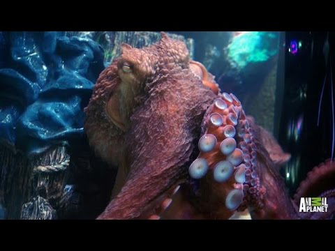 Wayde Fancies An Octopus Tank | Tanked
