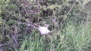 Weird nest