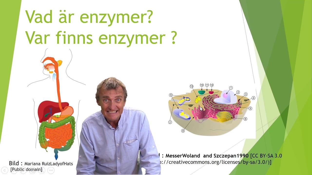 enzymer i matspjälkningen