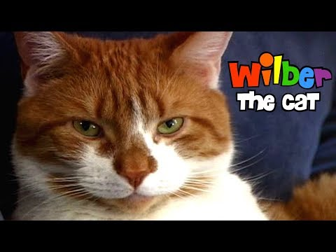 Wilber The Cat (Episode 1)