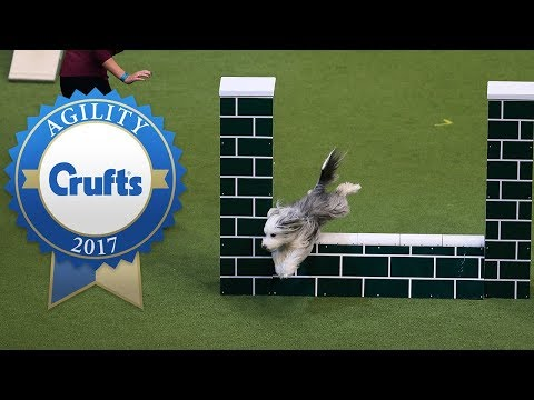 Fastest Dogs! Singles Agility Competition Final at Crufts 2017