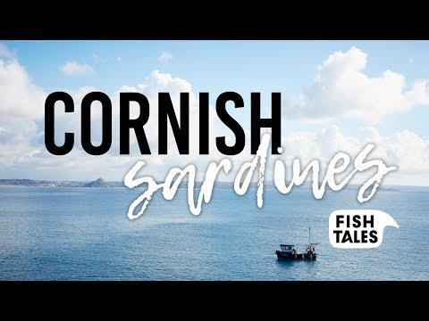 SARDINES Fishing In Cornwall   Fish Tales