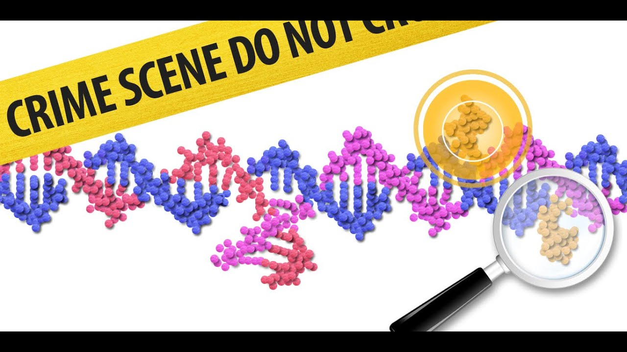 dna sequencing virtual lab