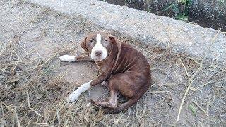 Бездомная собака спасла больного Альцгеймером пенсионера.