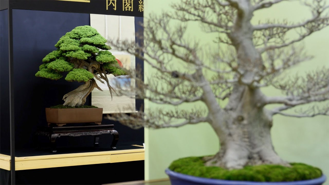 Top 20 Bonsai Trees Youtube