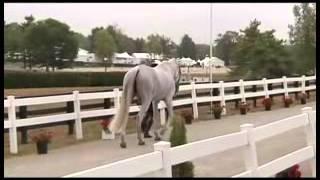 CLASS HORSE TV - La vetrina dei cavalli italiani