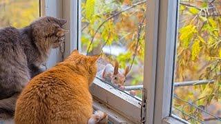 Осторожно, Белка! Забрать корм у кошки и подразнить!