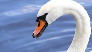 秋川雅史の「若山牧水・白鳥の歌(藤山一郎)」をオカリナで吹いてみま...