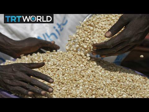 Money Talks: Genetically modified corn now legal in Uganda