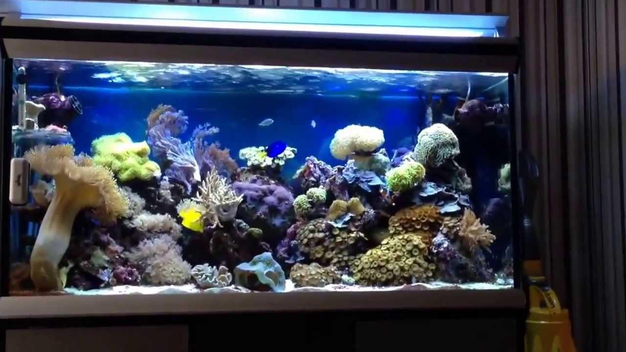 Update 2013 reef tank 55 gallon youtube for 55 gallon fish tank setup