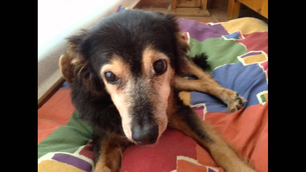 In Memory of Joy a great dog - Please help him share his ...