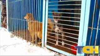 Бродячие собаки в Тюмени. Как бороться?