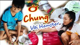 Thử Ở Chung Với Chuột Hamster Sẽ Như Thế Nào