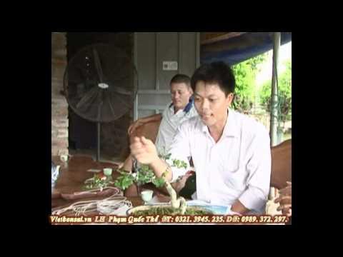 Vietbonsai.vn: Tạo hình nghệ thuật cho cây cảnh - P4