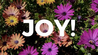 5 Tips for Finding Joy in Life