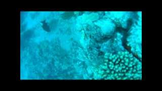 Livebait closeup view of the Reef!!  Underwater Fishing video!! Thumbnail