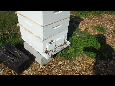 Honeybee hives and robbing prevention