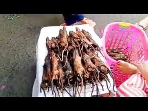 Dare to watch, how corna virus spread, wuhan market.