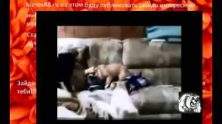видео приколы животными кошки и собачки