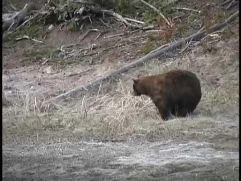 James Yule Presents: 003 - Big Ole Cinnamon Black Bear