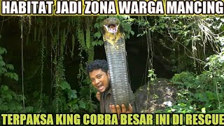 KING COBRA MONSTER THE INHABITANT OF THE CAVE | CRAZY! THERE'S STILL A HUGE ONE LIKE THIS?