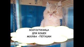 """Зоогостиница для кошек """"Москва-Петушки"""" 8-915-352-38-66. Гостиница для кошек, Передержка кошек"""