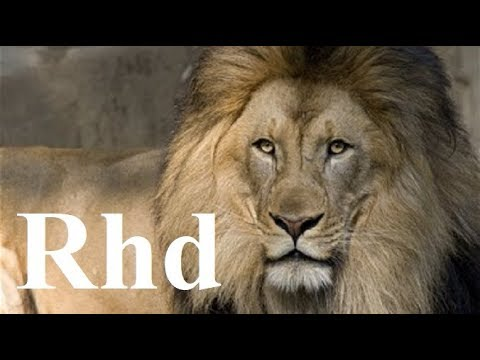 lions hunting pride, Hyenas, Cheetah, Predators,   Nature 2018 HD Documentary.