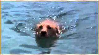 yunusun köpeği kurtarması