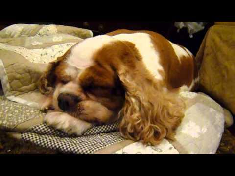 Cute Snoring Dog