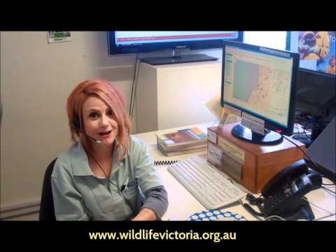 A Message From Wildlife Victoria
