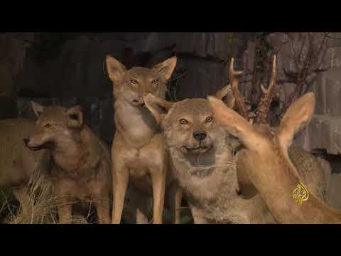 هذا الصباح-متحف للحيوانات البرية في أنقرة  - نشر قبل 2 ساعة