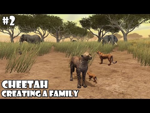 Ultimate Savanna Simulator - Cheetah -Creating a Family- Android/iOS - Gameplay Part 2