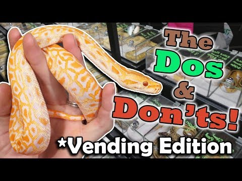 How to Vend at a Reptile Expo!