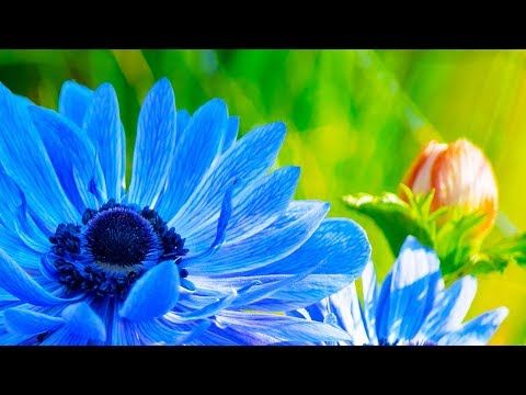 Morning Relaxing Music - Peaceful and Relaxing Piano Music (Julia)